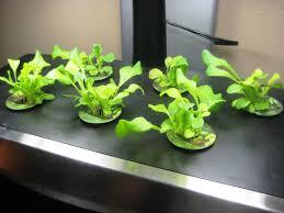 Indoor Herb Garden Light Indoor Herb Garden Kit With Light Home Outdoor Decoration