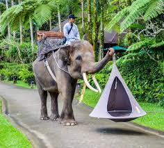 Hanging Tent by Cocoon Hammock Tent Peeinn Com