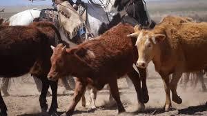 may ranch roundup youtube