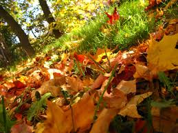 autumn leaves desktop wallpapers free on latoro com