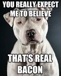 Dog Bacon Meme - livememe com incredulous dog