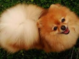dog breeds a comprehensive list of dog breed profiles petmd