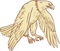 drawing sketch style illustration of bald eagle swooping wings