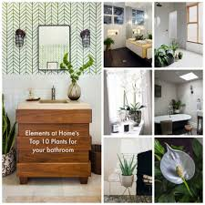 bathroom design awesome small bathroom plants house plants for