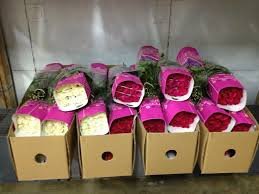 Wholesale Roses Wholesale Roses Online U2013 Macarena Farms U2013 Medium
