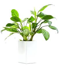best indoor plants for low light good small house plants super hearty house plants best small indoor