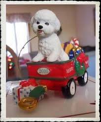 388 best bichon frise images on pinterest bichon frise bichons