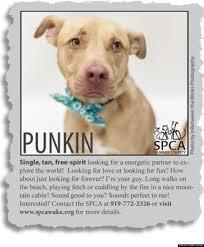 Seeking Pitbull Must Pit Bulls Animal Rescue Creates Adorable Personal Ads