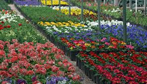 native plant nurseries flower nursery nurseries burke va perennials trees u shrubs for