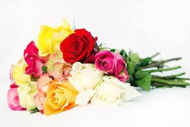 multicolor roses bouquet of fresh multicolor roses stock photo colourbox