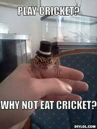 Crickets Meme - crickets too funny pinterest cricket geckos and reptiles