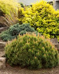 shrubs combs landscape