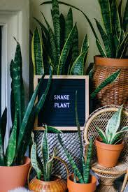 best houseplants for new plant parents u2014 black u0026 blooms
