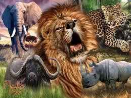 african safari animals african safari africa u0027s big 5 travel pinterest african