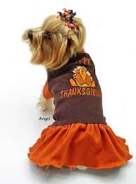 dogs alert pics for some happy thanksgiving cheer happy