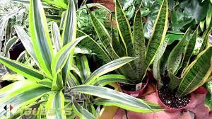 house plants indoor at home depot youtube