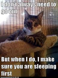It Can Wait Meme - animal memes the most interesting cat in the world no it can t