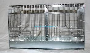 gabbie per gabbia 55 cm domus molinari gabbie per allevamento esotici