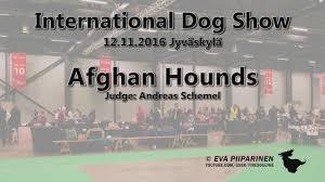 afghan hound national dog show international dog show in jyväskylä 12 11 2016 u2022 afghan hounds