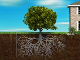 root barrier creating an environment for trees and structures to