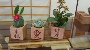 Cactus Planters by 5 Year Wood Hand Crafted And Unique Wood Gifts