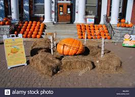 a display of pumpkins outside stowe town hall at halloween in