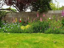 climbers for back of flower bed gardening forum gardenersworld com