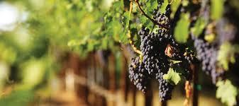 the texas hill country wine region horseshoe bay resort