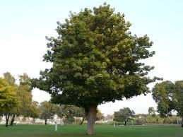 tree texture 0125 texturelib