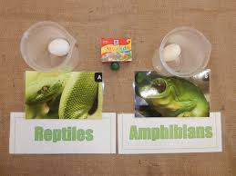 hop into acton with the reptile vs amphibian skin test u2013 using