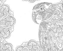 111 parrot images beautiful birds