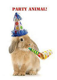 rabbit birthday card party animal bunny in party hat greeting