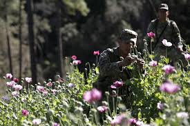 Opium Mexican Drug Cartels And Heroin In The Us Business Insider