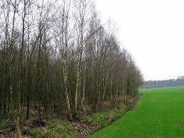 treeguide at www bomengids nl european trees