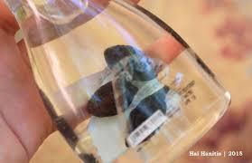 Minyak Zaitun Untuk Rambut Di Alfamart minyak zaitun olive herborist ovale wardah hanitis