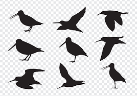 snipe birds silhouettes download free vector art stock graphics