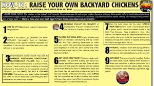 What To Feed Backyard Chickens by How To Raise Your Own Backyard Chickens U2013 Reved Quarterly
