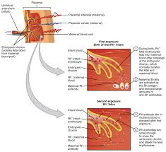 blood typing anatomy and physiology
