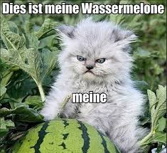 Watermelon Meme - lolcats watermelon lol at funny cat memes funny cat pictures