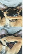 Dog Meme Generator - excited dog meme template by josael281999 on deviantart