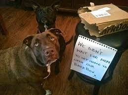 Dog Shaming Meme - the ultimate collection of dogshaming pics barkpost