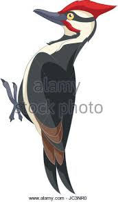 woodpecker illustration stock photos u0026 woodpecker illustration