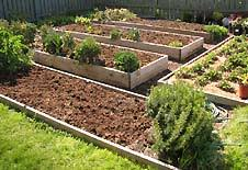 backyard vegetable garden eartheasy com solutions for