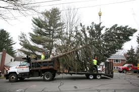 lexus of danvers staff slideshow the christmas tree is brought to danvers square