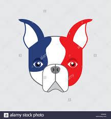 Boston Terrier Flag Pet Flag Stock Photos U0026 Pet Flag Stock Images Alamy
