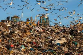 Are You Can Eat Buffet by Birdist Rule 44 Learn To Love Landfills And Sewage Treatment