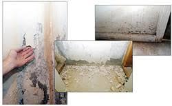 zenwall basement wall paneling system basement doctor northwest