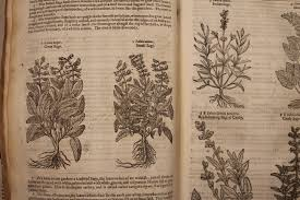 adventbotany u2013 getting stuffed at christmas sage herbology