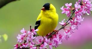 spring birds wallpaper pictures quality images on animal picture