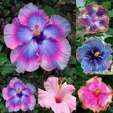 Cheap Flower Seeds - 106 best seeds shops images on pinterest flower seeds the sun